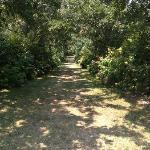 one of the paths at Tower Hill