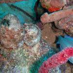 Interesting coral growth taken through a porthole on Atlantic Princess