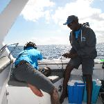 checking for sperm whale clicks using a sonar