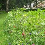 Gardeners created a little patch of Romantic wild flowers in the park, gorgeous