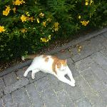 The Hotel's Cat, 'Donut'.