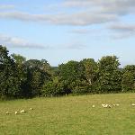 vue de la campagne environnante depuis la chambre