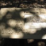 Banyan Tree Historical Marker, Lahaina, Maui, HI