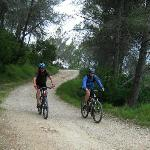 Mountain biking in the forests of Valencia