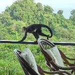 Monkey on balcony
