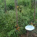 Fresh Vegetable Garden for your Sale and Pizza