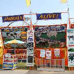 The unusual animal display @ the Fair - MUST SEE $2 each