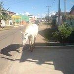 Main Road in Abadiania Brazil