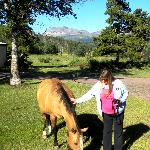 Tame Horse that greets guests