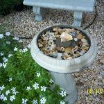 A birdbath full of pretty shells...