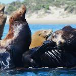Life of a sea lion up close