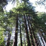 Wow, we love Redwoods!