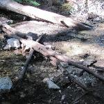 Logs are the trail crossing the creek.