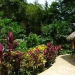 Colorful plantings