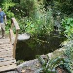 Bridge in backyard