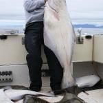 World Class Halibut Fishing