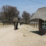 resident elephants
