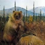 Grizzly - Northern Wildlife Museum, Teslin