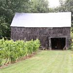 Barn & vineyard