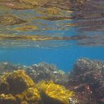 Colourful underwater