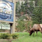 elk in front of hotel