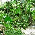 Un échantillon du jardin attenant à la cuisine extérieure.