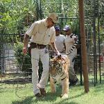 Joe Exotic starting our tour by showing us one of the big cats You can tell how much it loves h