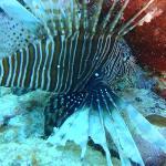 Buceo Sharky Dive