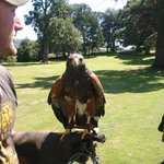 One of the trainers holding a Gyr Hawk.