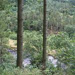 Hafod - Lady's trail 2