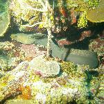 Eel- scuba diving