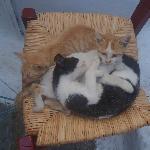 Cats i Chora