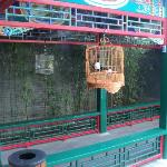 Bird cages on covered walkway