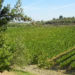 Mormoraia vineyards