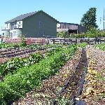Farm and garden
