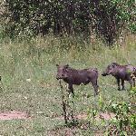 Rama Safaris & Day Tours Foto