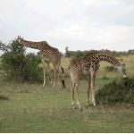 Viva Kenya Tours - Day Tour Photo
