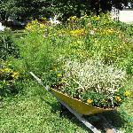 Sideyard with wheelbarrow flowing with flowers