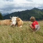 A friendly Swiss cow - hike from the hotel