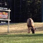 Elkhorn Lodge Sign