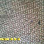 Room Carpeting--how nice--and we paid for this