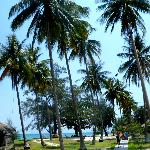 Very high coconut trees surrounding the resort