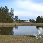 Own pond