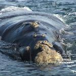 Whale Watchers Hermanus