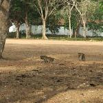 lots of monkeys in the hotel grounds