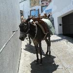 donkey taxi up to acropolis