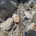 shedded snake skin found in rocks