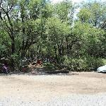 Tent area with  more trees (these sites go fast)