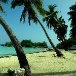 Palms lining the beach