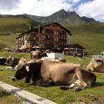 cows in front of hotel Alpina and the telecabine to Eggishorn in the background